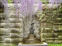 Wisteria in the walled garden at the Biltmore Estate