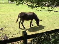 A donkey at Hackney City Farm