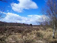 Heathland in Sutton Park (© stephen boisvert, CC-BY-ASA-2.0)