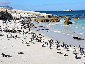 The Boulders Penguin Colony