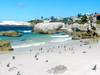 Get close to thousands of African Penguins at Boulder's Beach near Simon's Town.