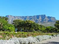 The Company's Gardens offer great views over Table Mountain