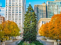 A giant christmas tree in Chicago's Millennium Park