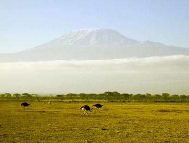 Ostriches on the plains; Kilimanjaro in the background. (© mattbuck , CC-BY-SA-4.0)