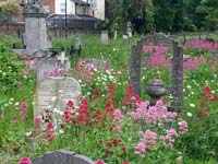 Flowers amongst the graves at Tower Hamlets Cemetery Park