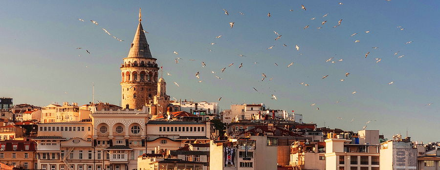 Birds flying over the houses of Istanbul, Turkey