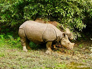 A rhino in the Chitwan National Park.
