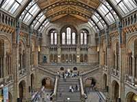 An image of the cavernous central hall of the Natural History Museum
