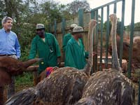 John Kerry seeking elephants, rhinos and ostriches at the Sheldrick Orphanage