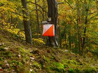 Swiss Orienteering Week
